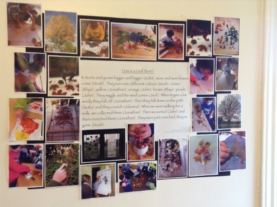 Acorn: How is a leaf born?