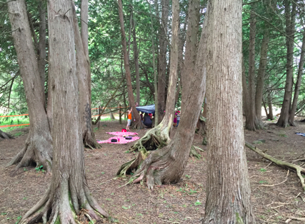 The Magical Forest of Learning and Inquiry