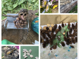 Inspired Professional Learning in and withNature
