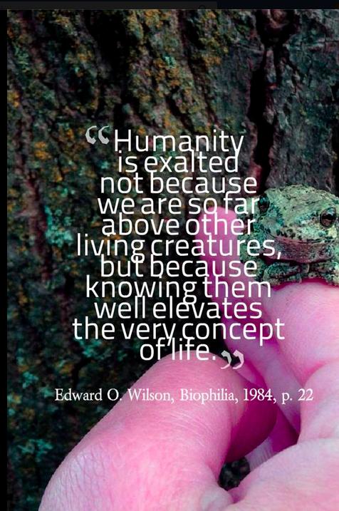 Wilson quote
