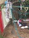 Weaving a den
