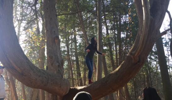 exhilarating-tree-climbing