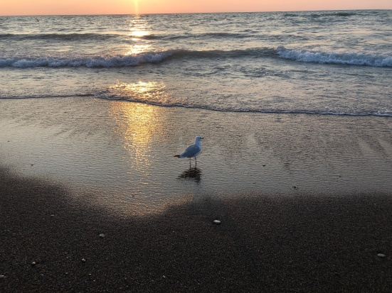 On Being Mindful at the Beach