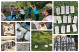 Knowing it in our Bones: Outdoor and Nature Play for Children and Adults